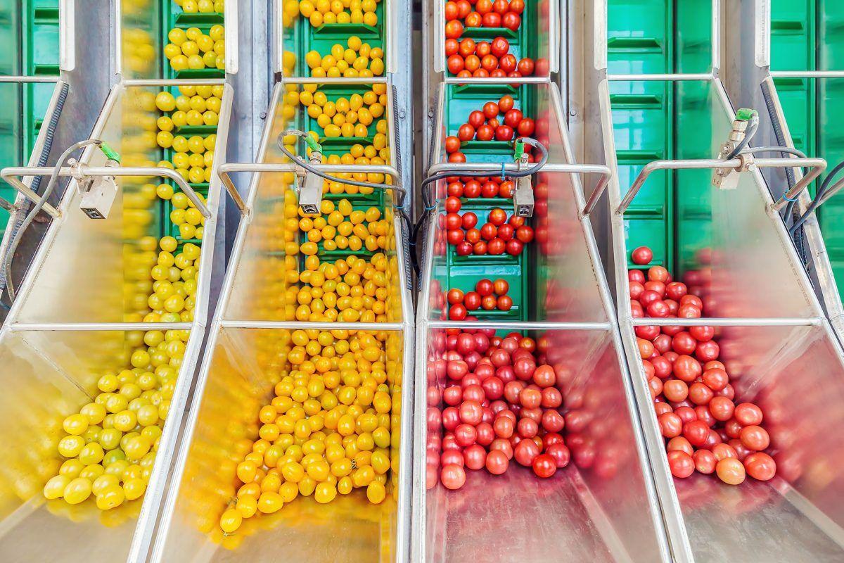 Las exportaciones agroalimentarias casi se duplican en la última década