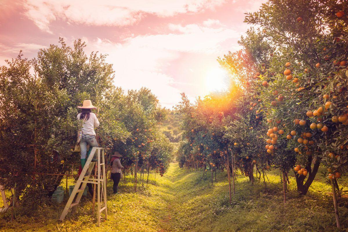 Vivir en el campo es una opción real, ¿posible para ti?