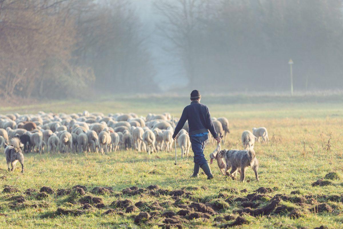 Escuelas de pastores, la esperanza de un sector en riesgo de desaparecer