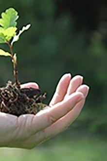Los fondos y la inversión bajo criterios de sostenibilidad