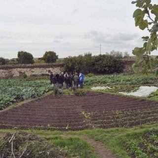 """Manuel Redondo, de la Red TERRAE: """"la agricultura sostenible es un sector en crecimiento a pesar de la crisis"""""""